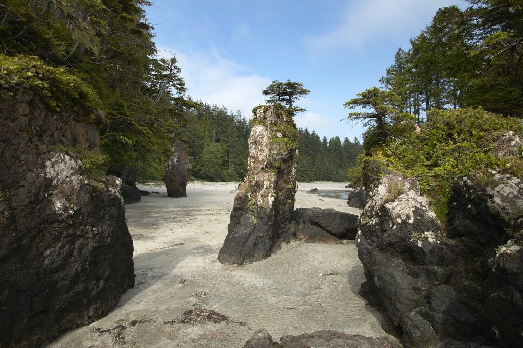 Vancouver Island X Trails